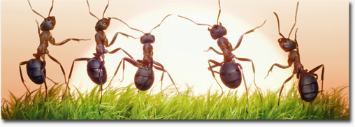 Our Pest Management Services include ant extermination